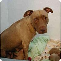 Adopt A Pet :: Carmella - Fort Lauderdale, FL
