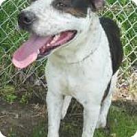 Adopt A Pet :: Ralph - Gary, IN