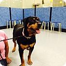 Adopt A Pet :: Roxie