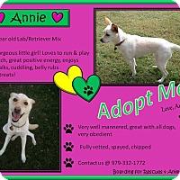 Adopt A Pet :: Annie - El Campo, TX