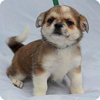 Adopt A Pet :: Abby - Charlemont, MA