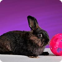 Adopt A Pet :: Anise - Marietta, GA