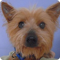 Adopt A Pet :: Wally - Chesterfield, MO