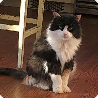 Adopt A Pet :: LEXI - Oakland Gardens, NY