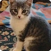 Adopt A Pet :: Louie - Horsham, PA