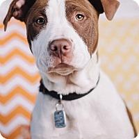 Adopt A Pet :: Muesli - Portland, OR