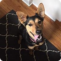Adopt A Pet :: Minie - Manhasset, NY
