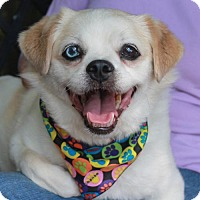 Adopt A Pet :: Cole-PENDING - Garfield Heights, OH