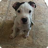 Adopt A Pet :: Slick - Dallas, TX