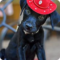 Adopt A Pet :: Salvadore - Baton Rouge, LA