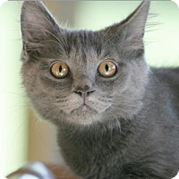 Adopt A Pet :: Ruger - North Fort Myers, FL