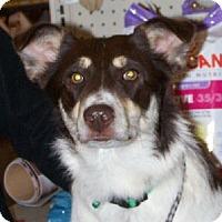 Adopt A Pet :: T Leanna - Lafayette, LA