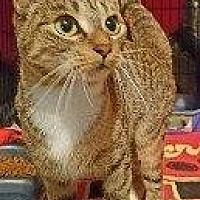 Adopt A Pet :: MERCEDES 2 - Hampton, VA