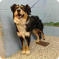 Adopt A Pet :: URGENT on 10/29 SAN BERNARDINO - San Bernardino, CA