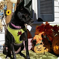 Adopt A Pet :: Onyx aka Brandy in New England - Providence, RI
