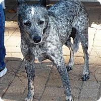 Adopt A Pet :: Bella - Eastpoint, FL