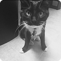 Adopt A Pet :: Nebula - Chelsea - Kalamazoo, MI