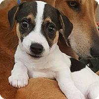 Adopt A Pet :: Larry - joliet, IL