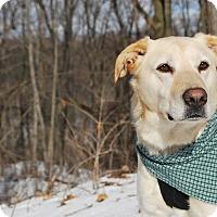 Adopt A Pet :: Noah - New Castle, PA