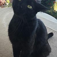 Adopt A Pet :: Spirit - Port Richey, FL