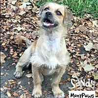 Adopt A Pet :: Sandy---Courtesy Listing - Fort Worth, TX