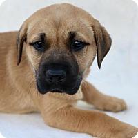 Adopt A Pet :: Milkshake - Picayune, MS