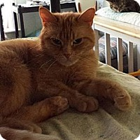 Adopt A Pet :: Polyanna Red - Orillia, ON