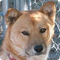 Adopt A Pet :: Linda - Emporia, KS