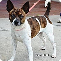 Adopt A Pet :: Kurt in Houston - Houston, TX