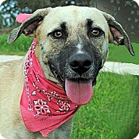Adopt A Pet :: Jacquline - Gonzales, TX