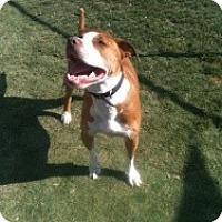 Adopt A Pet :: Jax - Justin, TX
