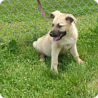 Adopt A Pet :: Scout - Lancaster, OH