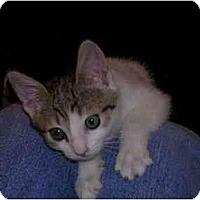 Adopt A Pet :: Isis - Davis, CA