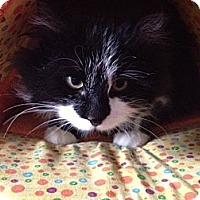 Adopt A Pet :: Tucker - Byron Center, MI