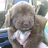 Adopt A Pet :: Sylvester - Glastonbury, CT
