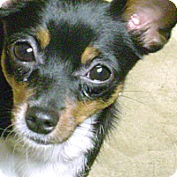 Adopt A Pet :: Trinket 2 - Rockaway, NJ