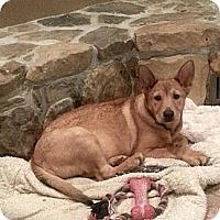 Adopt A Pet :: Etta - Russellville, KY
