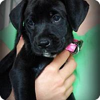 Adopt A Pet :: Jala - Sinking Spring, PA