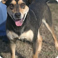 Adopt A Pet :: Marnie (MRHS) - Harrisonburg, VA