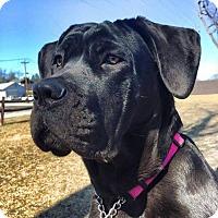 Adopt A Pet :: Reba-OH - Virginia Beach, VA