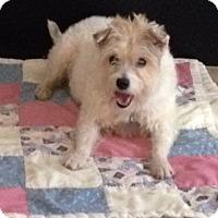 Adopt A Pet :: Fancy - Westport, CT