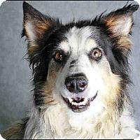 Adopt A Pet :: Koda - Glenrock, WY