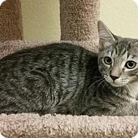 Adopt A Pet :: Tail Wagger - Phoenix, AZ