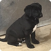 Adopt A Pet :: Ozzie (has been adopted) - Trenton, NJ