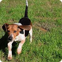 Adopt A Pet :: Lucy Lou - Cochran, GA