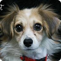 Adopt A Pet :: Elliot - Rockwall, TX