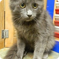 Adopt A Pet :: Reign - Columbus, NE