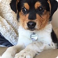 Adopt A Pet :: Vp litter - Reagan - ADOPTED - Livonia, MI