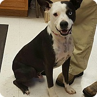 Adopt A Pet :: Bango - Trenton, NJ