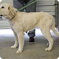 Adopt A Pet :: Dana - Kyle, TX